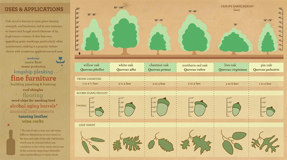sc 1 st  hello phong & Oak Trees Infographic - HELLO PHONG